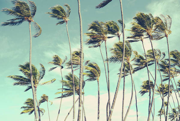 Wall Art - Photograph - Retro Vintage Hawaii Palm Trees In The Wind by Mr Doomits