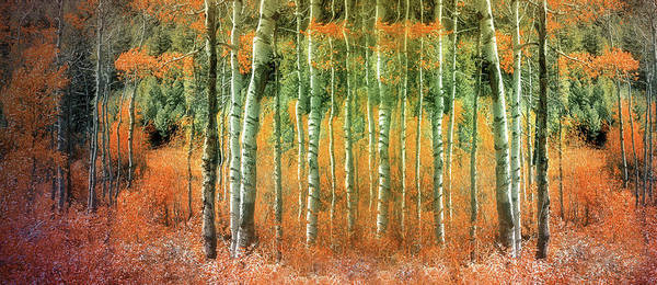 Photograph - Returning The Lost Autumn by Tara Turner