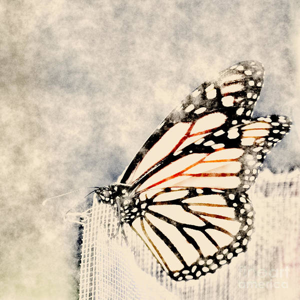 White Butterfly Digital Art - Reve De Papillon - 11a by Variance Collections