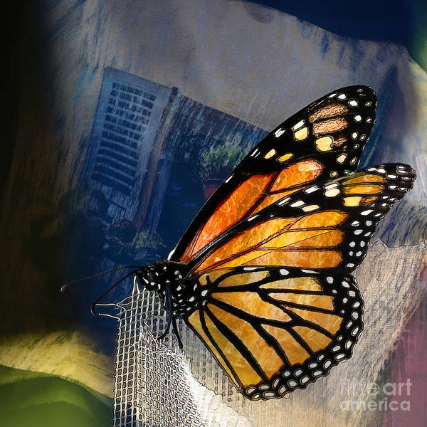 Monarch Butterflies Photograph - Reve De Papillon  by Variance Collections