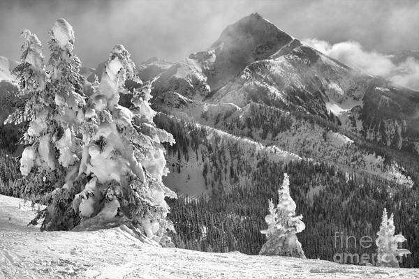 Photograph - Revelstoke Snow Ghosts Black And White by Adam Jewell