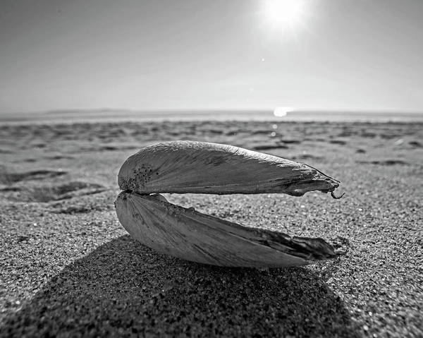 Photograph - Revere Beach Clam Shell Side Revere Ma Black And White by Toby McGuire