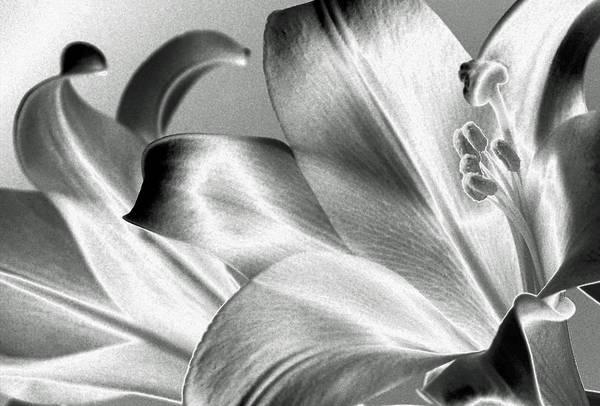 Photograph - Reverse by Steven Huszar