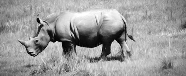 Photograph - Rhino In The Grasses by Alice Gipson