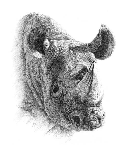 Drawing - Rhino by Lorrisa Dussault