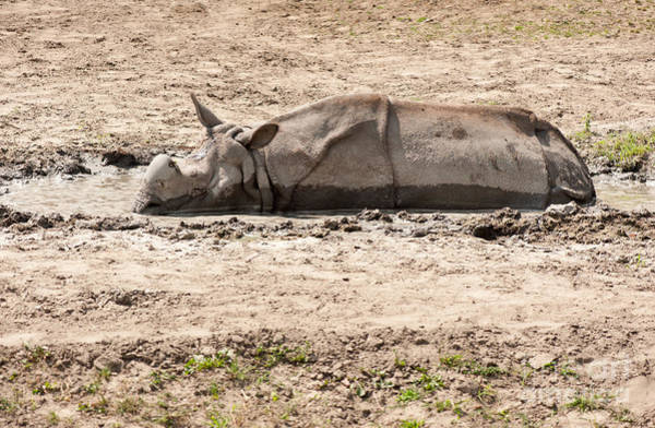 Wall Art - Photograph - Rhino Lying In Sand Puddle by Arletta Cwalina