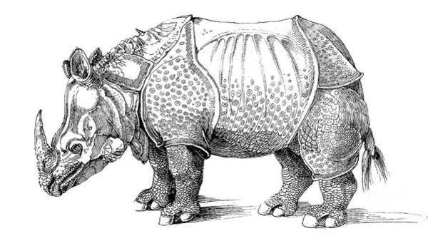 Armor Drawing - Rhinoceros by Albrecht Durer
