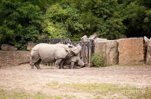 Wall Art - Photograph - Rhinoceros Meets Its Family by Arletta Cwalina