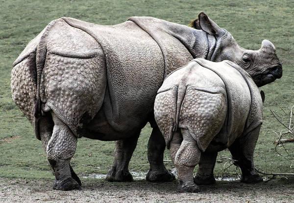 Rhinocerus Photograph - Rhinoceros Mother And Calf In Wild by Daniel Hagerman