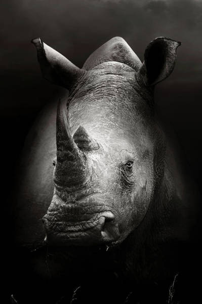 Wall Art - Photograph - Rhinoceros Portrait by Johan Swanepoel