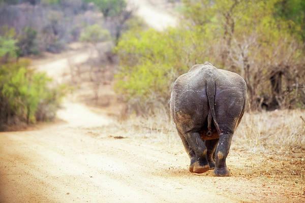 Photograph - Rhinocerous Walking Away Down Road by Susan Schmitz