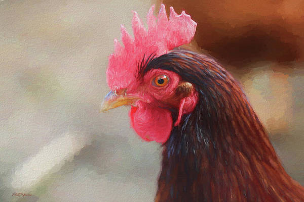 Painting - Rhode Island Red Head 1085 - Painting by Ericamaxine Price