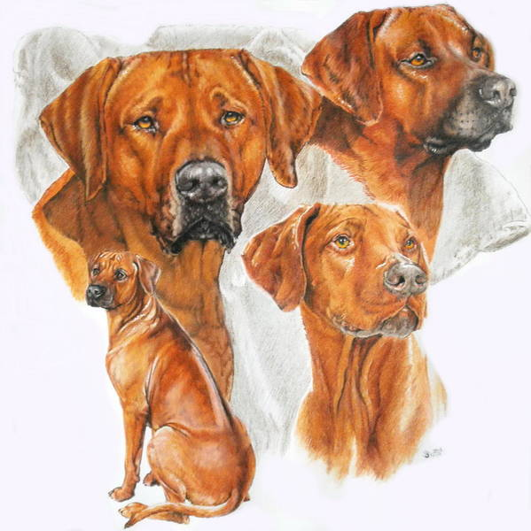 Mixed Media - Rhodesian Ridgeback Medley by Barbara Keith