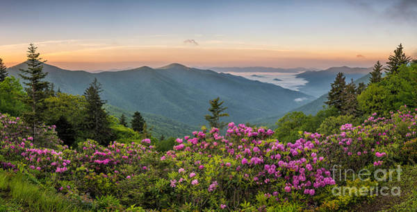 Wall Art - Photograph - Rhodo Bend by Anthony Heflin