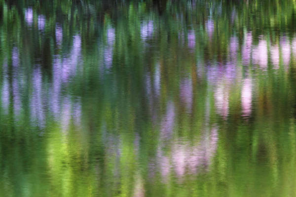Photograph - Rhododendron Impressionism Photography by Juergen Roth