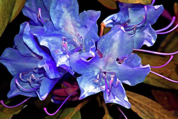 Digital Art - Rhododendron Fantasy 13 by Lynda Lehmann