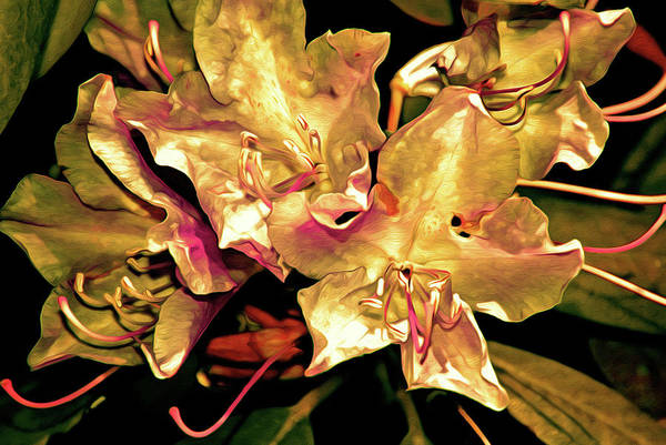 Digital Art - Rhododendron Glory 11 by Lynda Lehmann