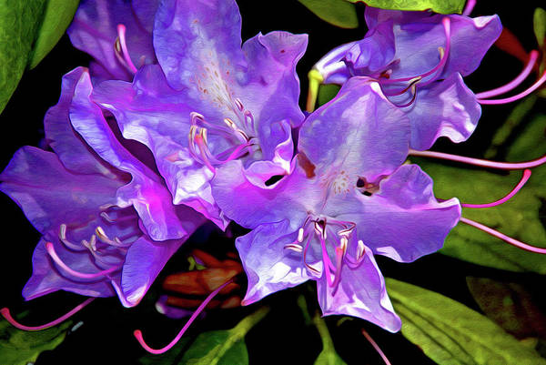 Gestural Digital Art - Rhododendron Glory 14 by Lynda Lehmann