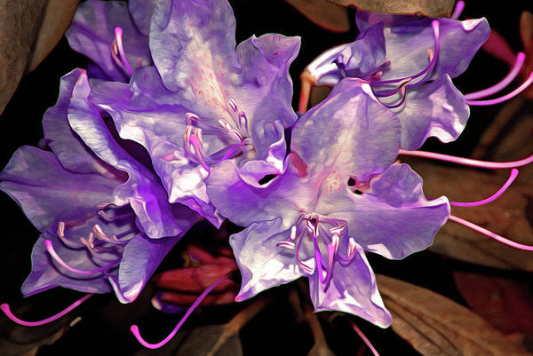 Gestural Digital Art - Rhododendron Glory 8 by Lynda Lehmann