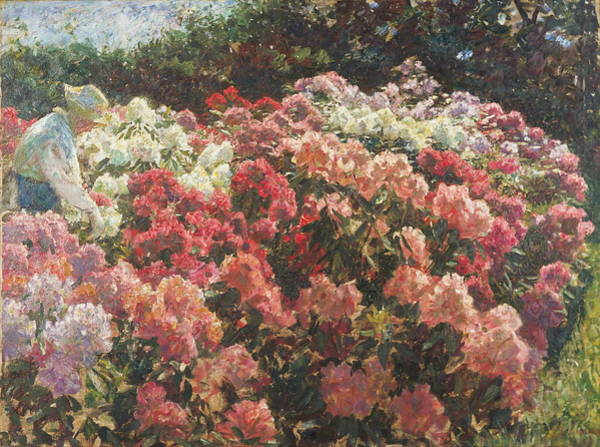 Wall Art - Painting - Rhododendron In Tuxens Garden 1917 by Laurits Tuxen
