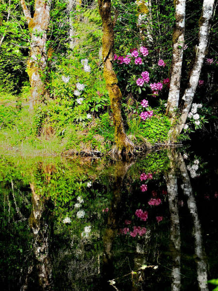 Photograph - Rhododendron Reflection by Tranquil Light  Photography