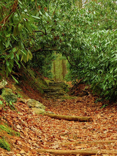 Photograph - Rhododendron Tunnel by Raymond Salani III
