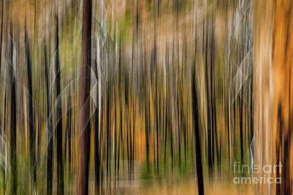 Photograph - Rhthym Of Colors Abstract Art By Kaylyn Franks by Kaylyn Franks