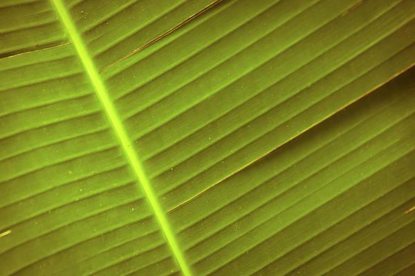 Photograph - Ribbed Texture by John Magyar Photography