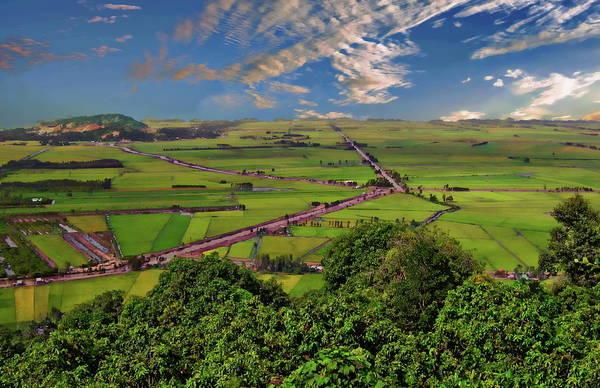 Photograph - Rice Field by Anthony Dezenzio