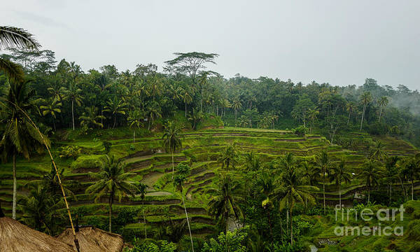 Photograph - Rice Field Terraces by M G Whittingham
