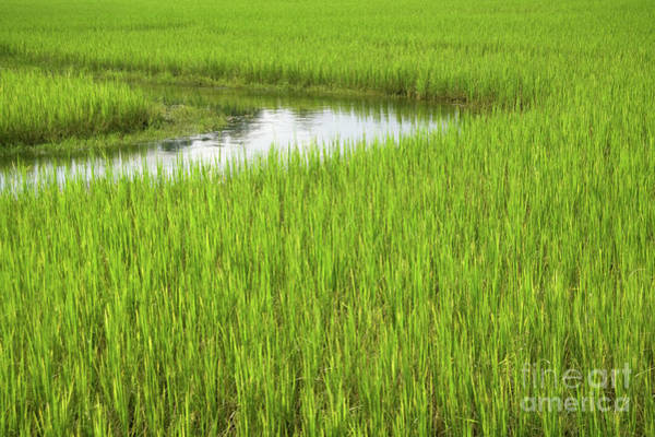 Wall Art - Photograph - Rice Paddy Field In Siem Reap Cambodia by Julia Hiebaum