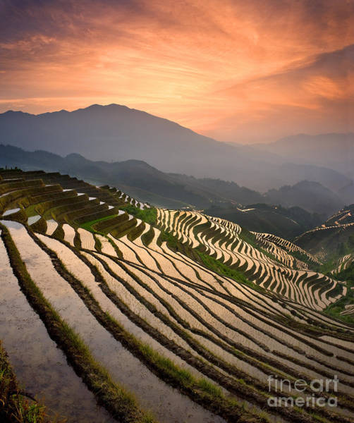 Wall Art - Photograph - Rice Terraces At Sunset by Howie Garber