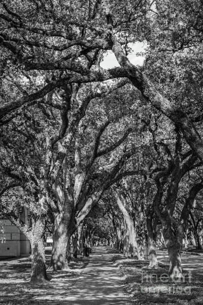 Photograph - Rice University Landscape by University Icons