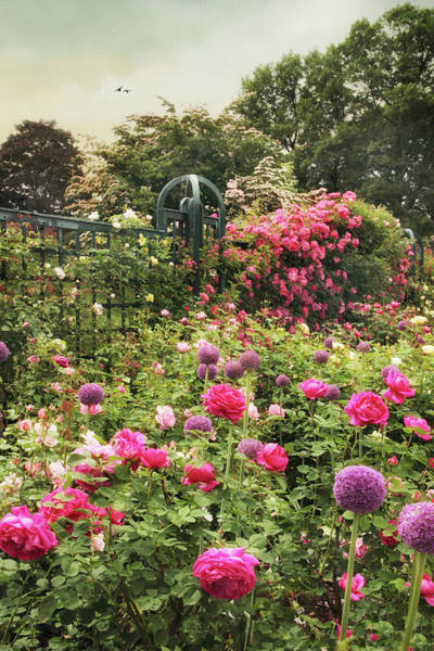Photograph - Rich In Roses by Jessica Jenney