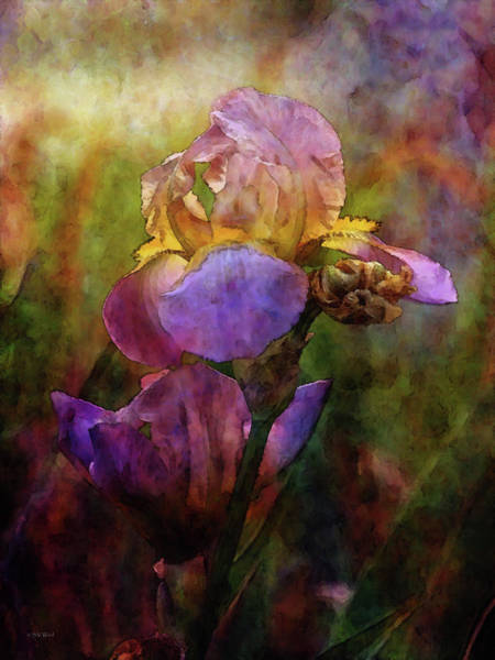 Rich Purple Irises 0056 Idp_22 Art Print