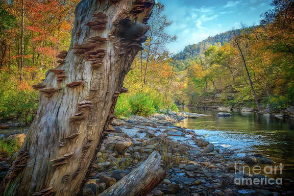 Photograph - Richland Creek by Larry McMahon