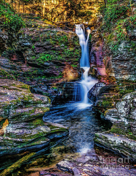 Photograph - Ricketts Glen- Adams Falls by Nick Zelinsky
