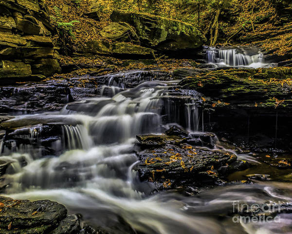 Photograph - Ricketts Glen Cascades by Nick Zelinsky