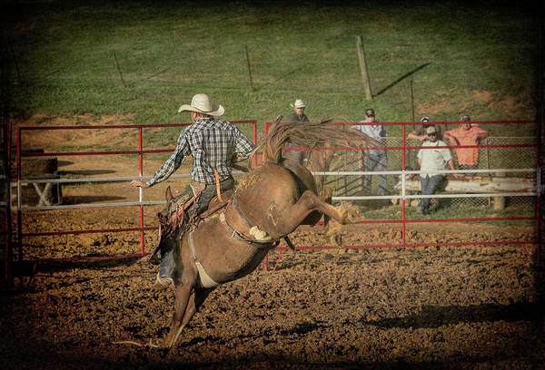Photograph - Ride Em Cowboy by Jim Cook