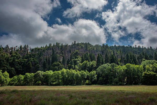 Photograph - Ridge Renewal by TM Schultze
