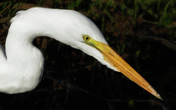 Photograph - Ridgefield Egret by Wes and Dotty Weber