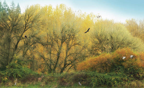 Wall Art - Photograph - Ridgefield National Wildlife Refuge Composite-2 by Angie Vogel