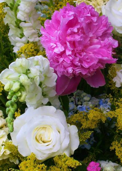 Photograph - Ridgefield Symphony Flowers by Polly Castor