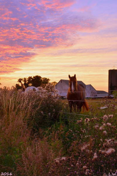 Photograph - Riding Off Into The Sunset by Lisa Wooten