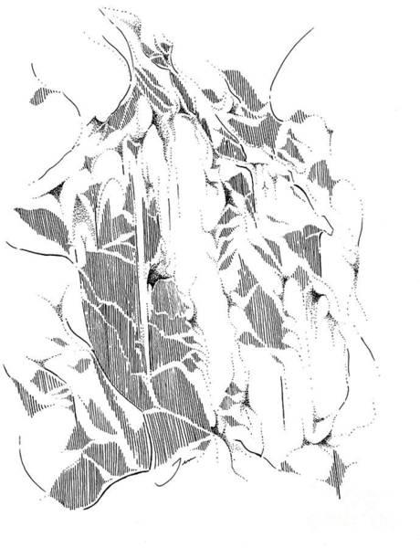 Wall Art - Drawing - Rifle Falls #2 by Jen Callison