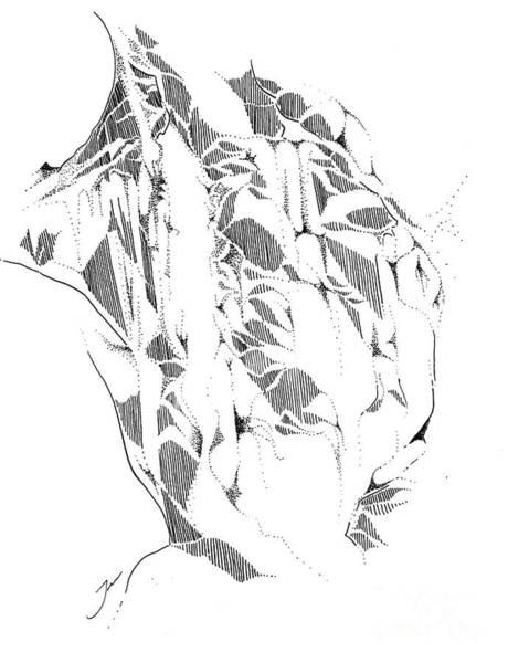 Wall Art - Drawing - Rifle Falls by Jen Callison