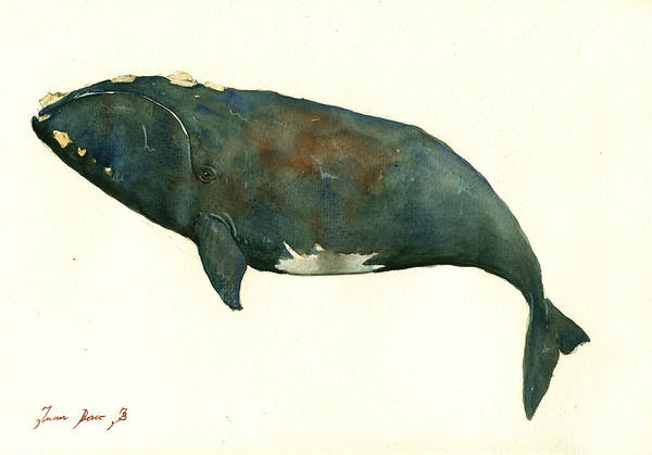 Right Painting - Right Whale Painting by Juan  Bosco