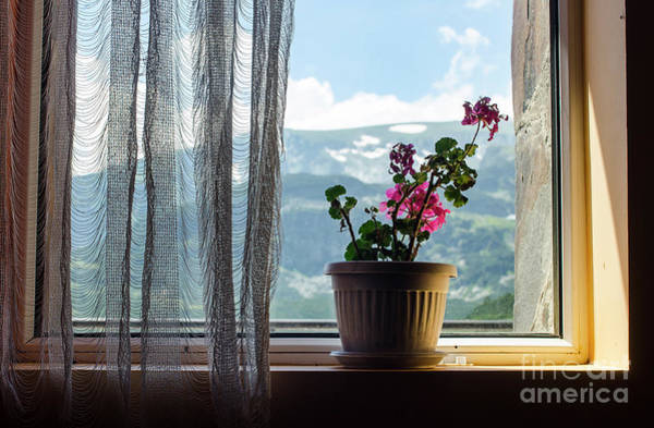Photograph - Rila Mountains-flowers by Steve Somerville