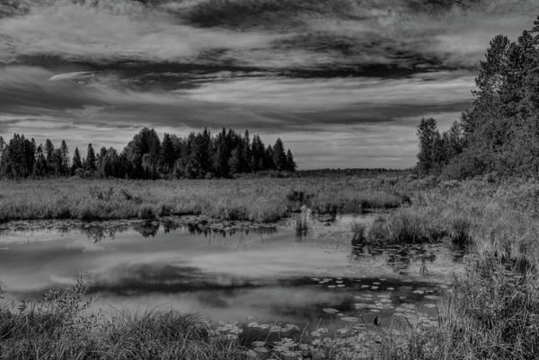 Photograph - Riley Creek Marshland Black And White by Dale Kauzlaric