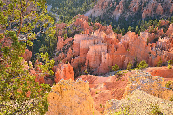 Photograph - Rim Trail At Bryce by Ray Mathis